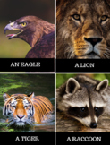 Animal Vocabulary Cards