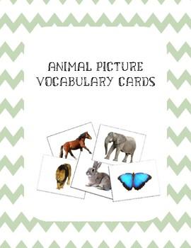 Animal Vocabulary Flashcards