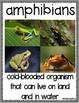 Animal Vocabulary Word Posters