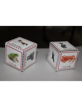Animal Walk Movement Cubes