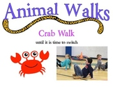 Animal Walks Station Cards