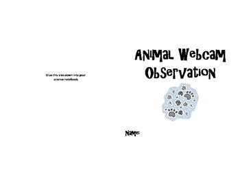 Animal Webcam Observation