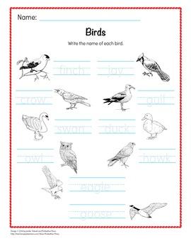 Animal Word Cards - Birds