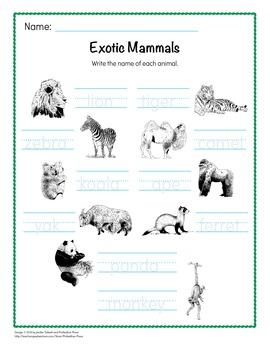 Animal Word Cards - Exotic Mammals