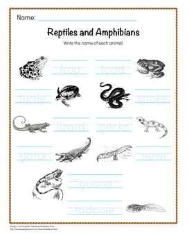 Animal Word Cards - Reptiles and Amphibians