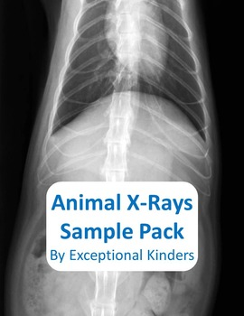 picture regarding Printable X Rays named Animal X Ray Worksheets Schooling Materials Lecturers Fork out