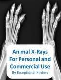 Animal X-Ray Images for Commercial Use