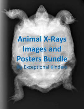 Animal X-Ray Images for Commercial Use and Posters Bundle