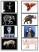 Animal X-Ray Matching Game