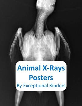 Animal X Ray Posters By Exceptional Kinders Teachers Pay