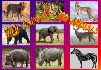 Animal, Zoo Animal, Wild Animal