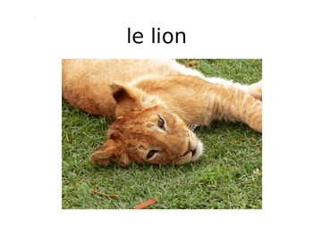 French Animal and Nature PowerPoint