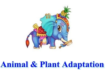 Animal and Plant Adaptation Test