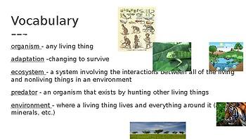 Animal and Plant Adaptations