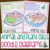 Animal and Plant Cell Biology Doodle Diagrams