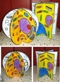 Animal and Plant Cell Craftivity - A Craftivity for Science
