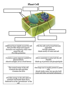 Animal and Plant Cell Diagram with Descriptions