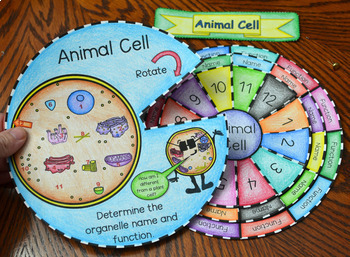 Animal and Plant Cell Wheel Foldable Bundle