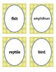Animal and Plant Classification Headbands Game