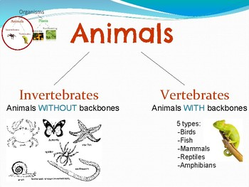Animal and Plant Classification Presentation
