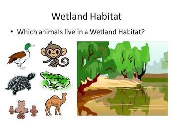 Animal and Their Habitats