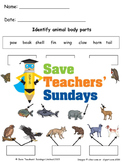 Animal body parts lesson plan and worksheets (2 levels of difficulty)