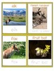Animal cards with Real Photos
