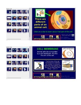 Animal cells lesson for special education