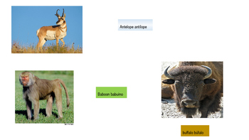 Animal cognates in spanish and english