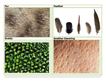 Animal coverings sort