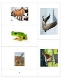 10 Animal flash cards-Free!
