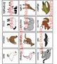 Animal flash cards animal teaching animals