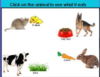 Animal habitats and foods that animals eat