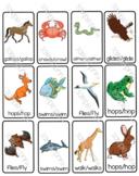 Animal movements