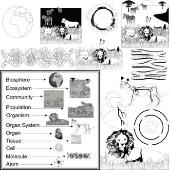 Animal's Biological Levels Of Organization