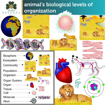 Animal's Biological Levels Of Organization
