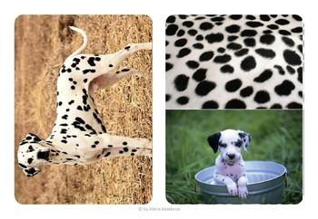 Animal skin matching and baby matching 2in1