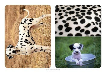 Animal skin matching and baby matching 2in1