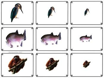 Animal themed math sorting