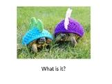 Animal_Turtle