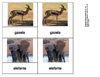 Animales Salvajes - (Wild animals in Spanish)
