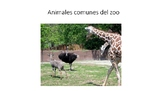 Animales comunes del zoo