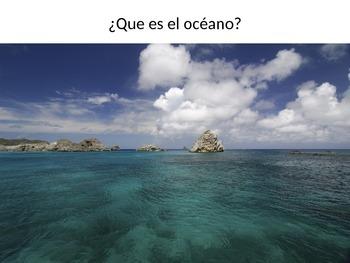 Animales del Oceano