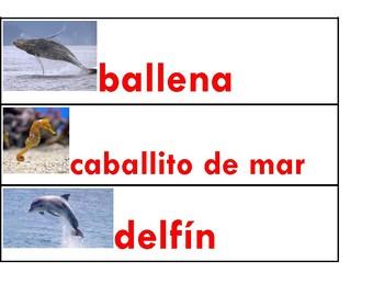 Animales del Océano Vocabulario