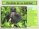 Animales en Peligro de Extinción: Presentación en PowerPoint y Actividades