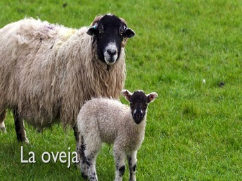 Animals in spanish (PowerPoint and Worksheets)