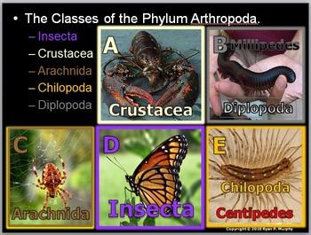 Animals, Kingdom Animalia, Animal Phylums, Mammals Bundle