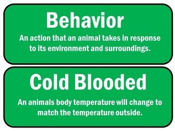 FREE Animals Unit Word Wall
