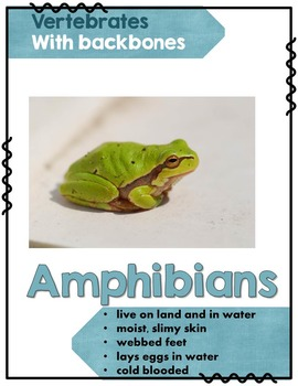 Animal Classification Posters - FREE