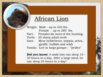 Disney-inspired: African Animals